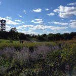 View of Chicago Botanic Garden's Evening Island, a five-acre island that is home to a carillion (bell tower of 23 bells), lots of geese, and endless bushes of Russian sage.